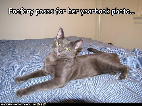 captions Cats foofany kkps Photo photogenic yearbook - 6565293568