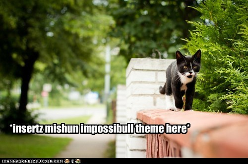 captions Cats danger mission mission impossible secret agent sneak wall