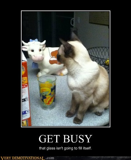 busy,cat,cow,milk