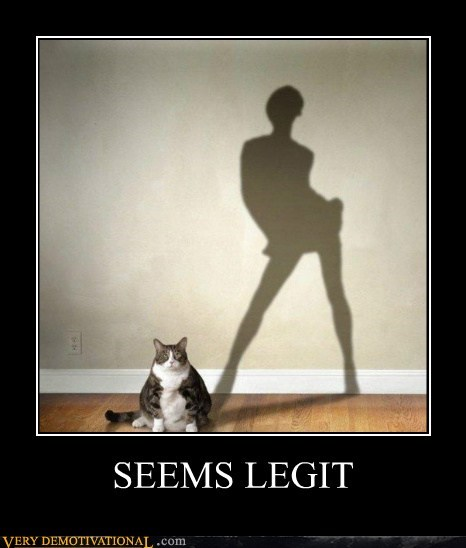 cat,fat,seems legit,sexy lady,shadow
