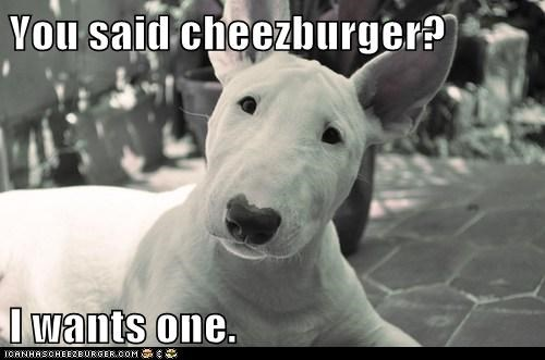 Cheezburger Image 6565415168