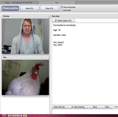 bawk,bok,chatroulette,chicken,true love