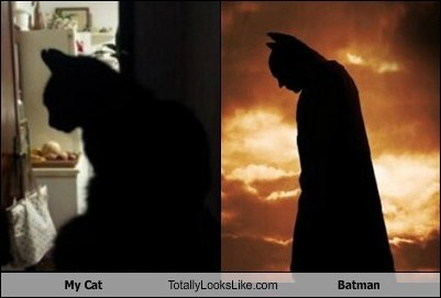 animal batman cat Cats christian bale funny look alikes the dark knight TLL totally looks like - 6565620480