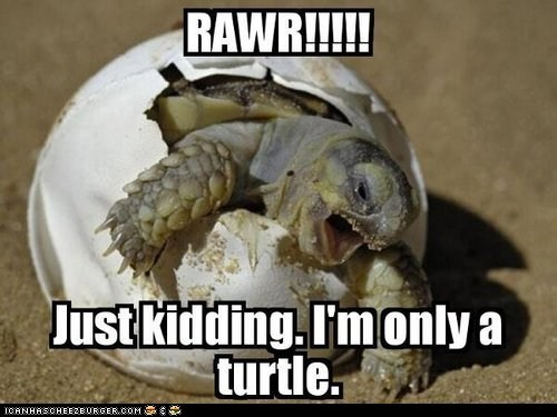 captions,eggs,hatching,just kidding,rawr,sea turtles,turtles