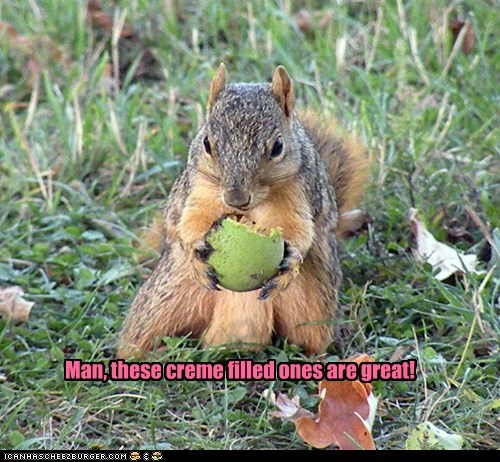 chocolate creme filled eating eggs great hungry squirrel - 6565763584