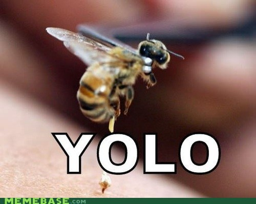 bees bees is a meme bees tho the saddest picture on th the saddest picture on the internet yolo