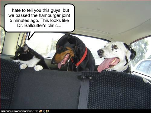 car,cat,dalmatian,doberman,dogs,trap,trick,vet