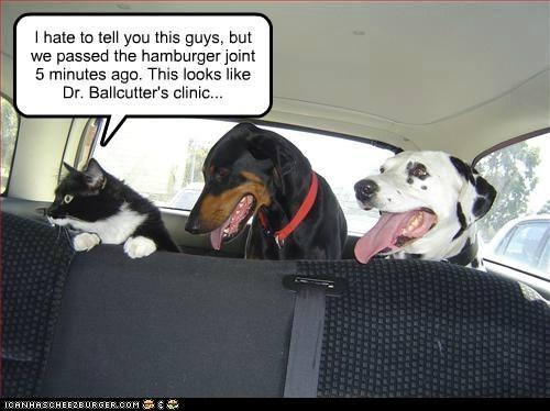 car cat dalmatian doberman dogs trap trick vet - 6565921280