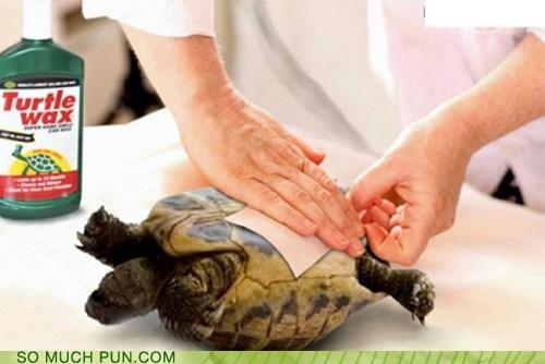 brand double meaning literalism misinterpretation name turtle turtle wax wax waxing - 6565983232