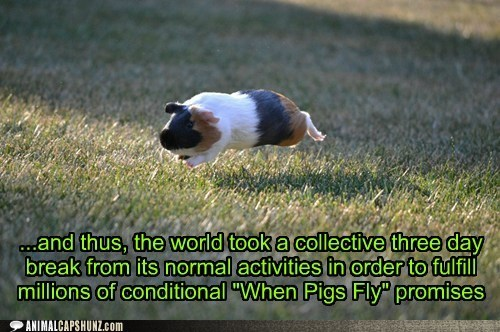 amazing,break,fulfilled,guinea pig,jumping,promises,when pigs fly