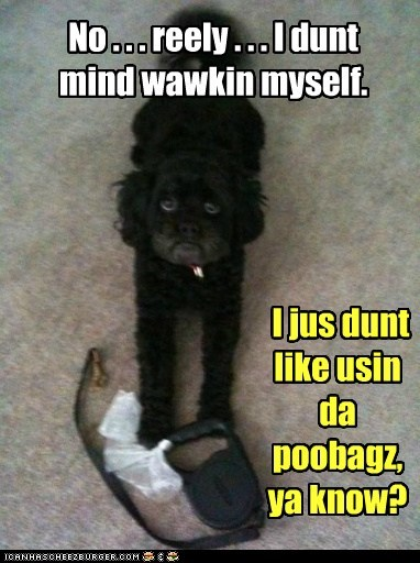 leash sad dog walking what breed - 6566306304