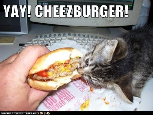Cheezburger Image 6566315520