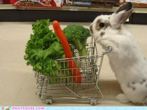 bunny,carrot,groceries,happy bunday,lettuce,rabbit,shopping cart,squee,super market