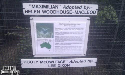 adoption naming Owl zoo - 6566534400