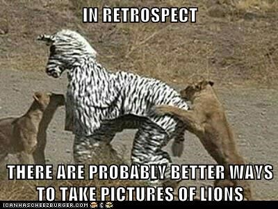 IN RETROSPECT THERE ARE PROBABLY BETTER WAYS TO TAKE PICTURES OF LIONS