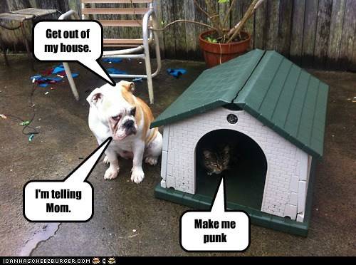 dogs,bulldog,cat,dog house,mean cat,im-telling