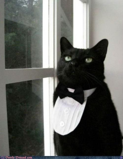 cat,tuxedo
