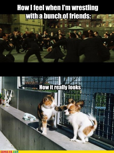 cats and dogs,fight,friends,the matrix