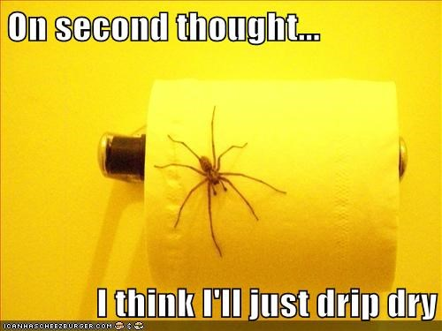 drip dry on second thought scary spider toilet paper - 6567695104