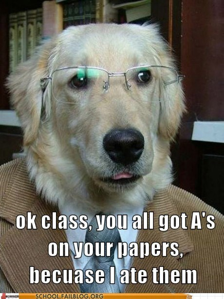again,ate your homework,dogs