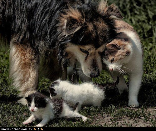 cat cuddles dogs friends kittehs r owr friends kitten - 6567784960