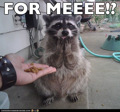 captions,cute,excited,for me,happy,omg,raccoons,treats