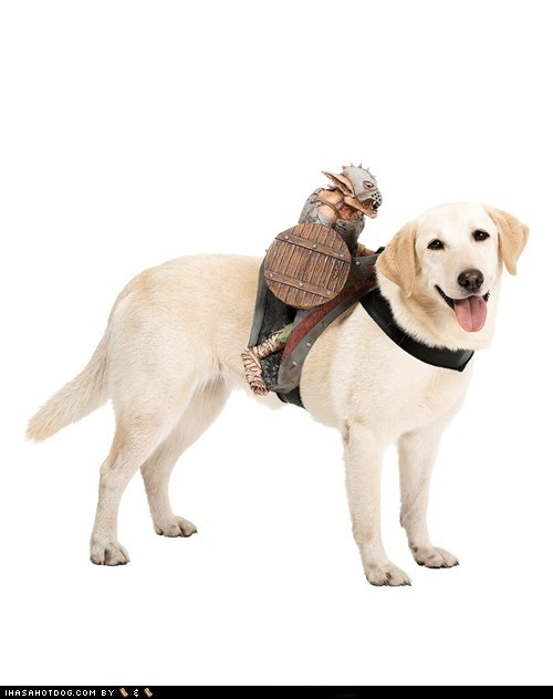 costume dogs goblin goggie swag golden lab monster - 6567876608