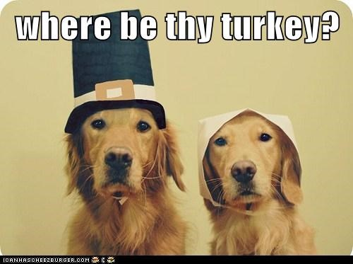dogs pilgrims thanksgiving captions Turkey - 6567906304