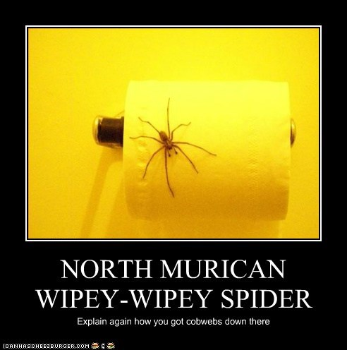 NORTH MURICAN WIPEY-WIPEY SPIDER Explain again how you got cobwebs down there