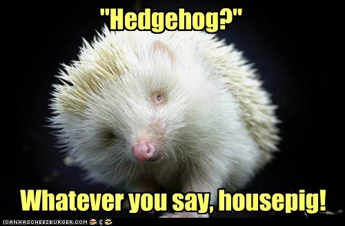 hedgehog,insulted,offended,pig,whatever you say