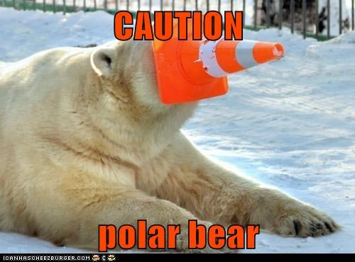 caution,obvious,polar bear,traffic cone,warning,wearing