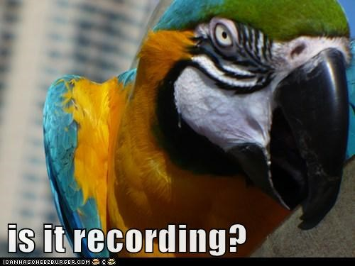 camcorder,camera,close,confused,parrot,recording,Staring