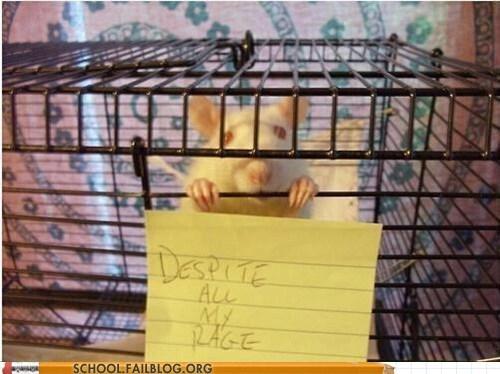 despite all my rage labrat rat in the lab The Smashing Pumpkins - 6568461312