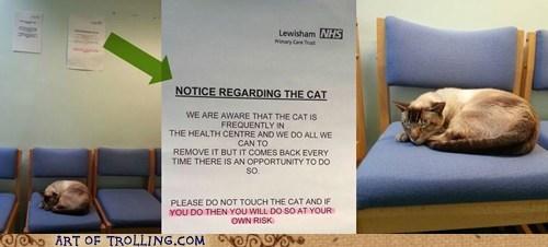 cat IRL sign - 6568530432