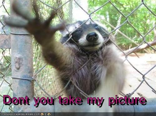 camera,dont,fence,grabbing,privacy,raccoon,reaching,taking pictures