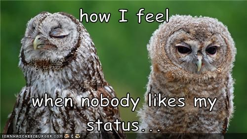 bitter facebook status likes nobody likes you Owl smug - 6569101568