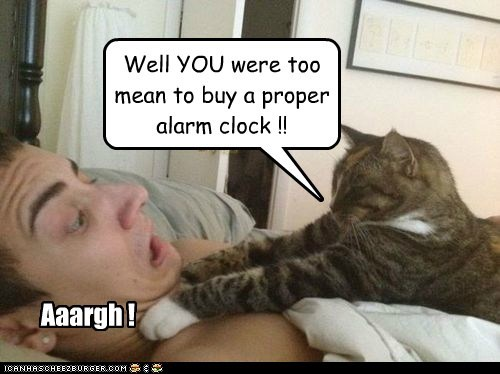Well YOU were too mean to buy a proper alarm clock !! Aaargh !