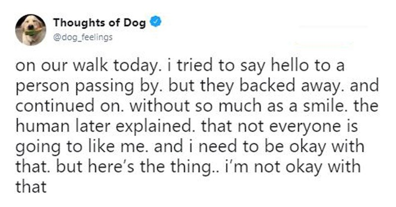 dogs cute dogs pets dog tweets doggos doggo tweets funny tweets thoughts of dog funny twitter adorable tweets adorable dogs dog thoughts - 6569477