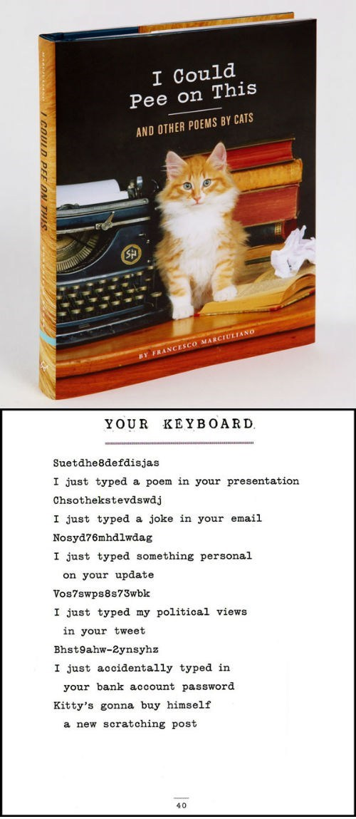 books cat like typing Cats keyboards poems poetry products writers