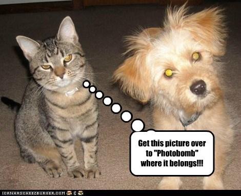 Cheezburger Image 6569888256