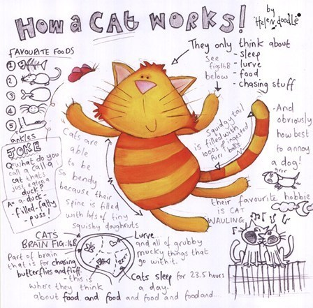 Cats,cute,doodles,drawings,how,how things work,illustrations,silly