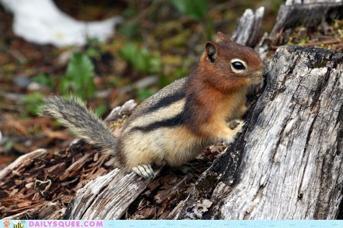 Forest squeekers tiny chipmunk squee - 6570002944
