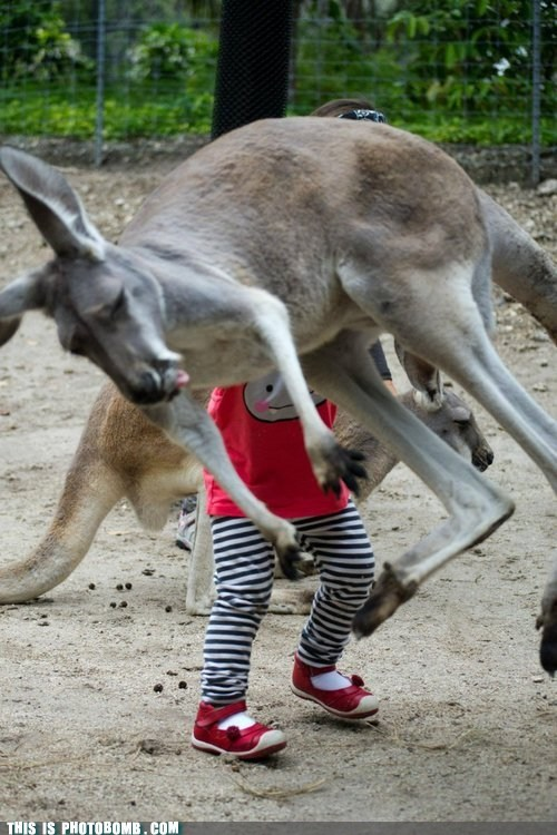 animal Gravity jumping kangaroo lol wtf