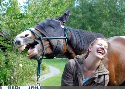 animals funny horse laughter - 6570144256