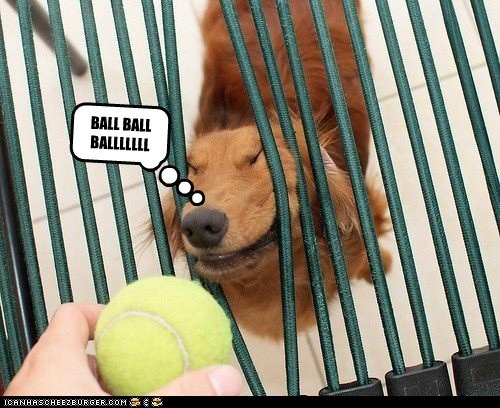 dogs what breed tennis ball ball must have want