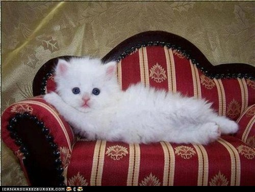 Cats couches cyoot kitteh of teh day draw me draw me like one of your french girls french girls kitten white - 6570360576