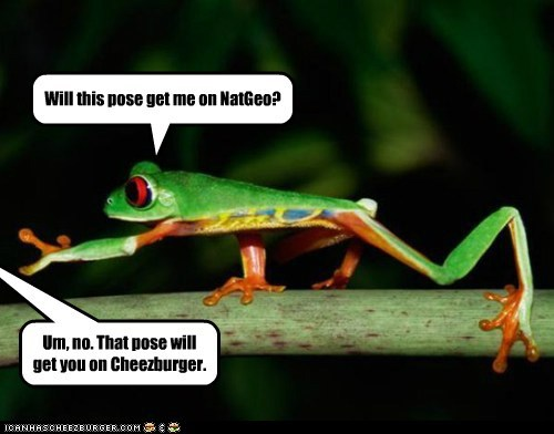 cheezburger,friends,honest,NatGeo,no,pose,silly,tree frog