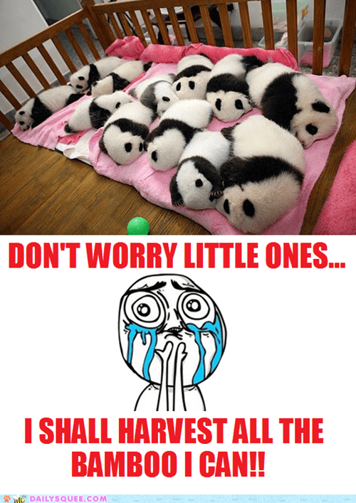bamboo,panda,cubs,too cute,squee,sleeping,panda bears