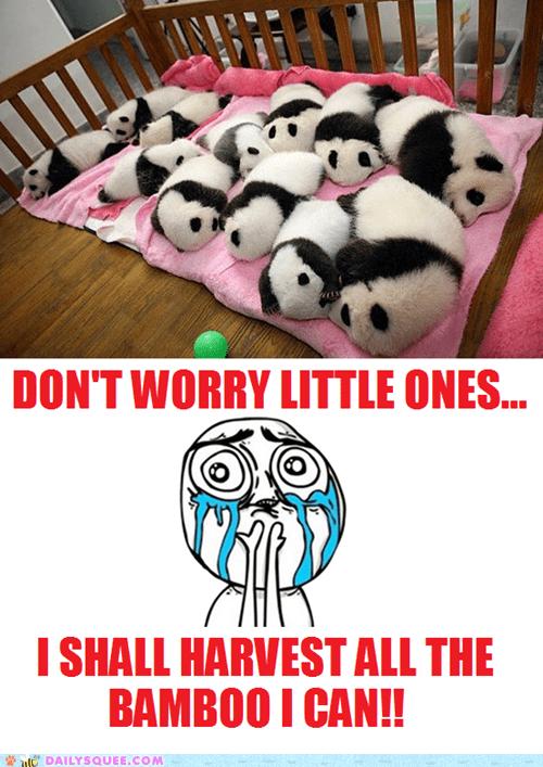 bamboo panda cubs too cute squee sleeping panda bears - 6570391040