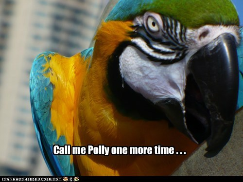 angry annoyed One More Time parrot polly Staring